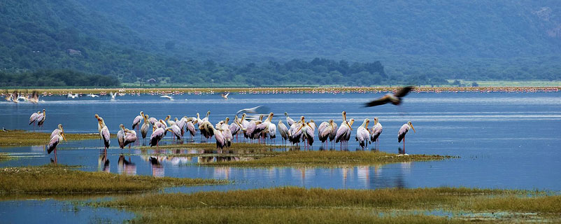 LAKE MANYARA / SERENGETI / NGORONGORO / TARANGIRE (8 Days & 7 Nights)