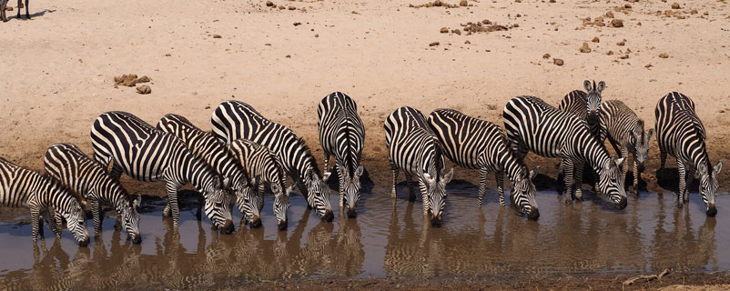 TARANGIRE / NGORONGORO / SERENGETI / LAKE MANYARA (7 Days & 6 Nights)